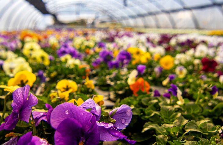 Frühlingserwachen in der Gärtnerei Schober