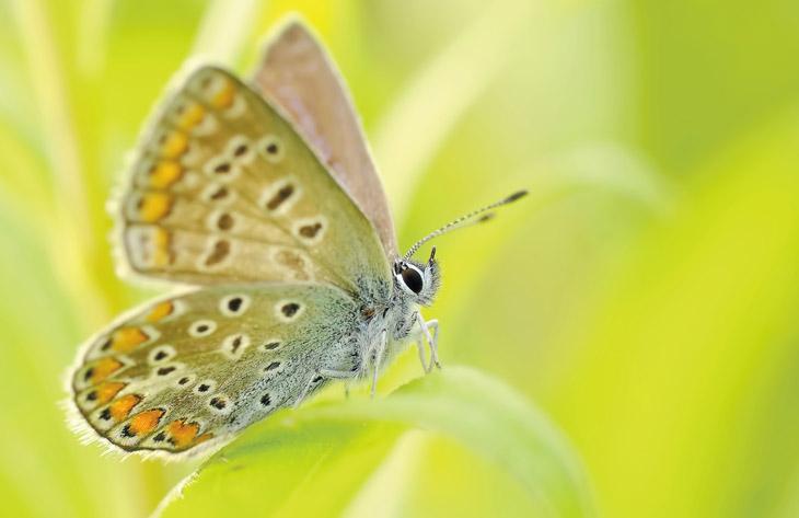 Ratgeber Insekten, Vögel und Co.