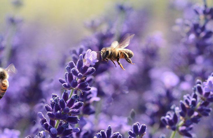 World Bee Day - Bienenweide und Insektenhotel